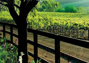 Wines from the sunny California