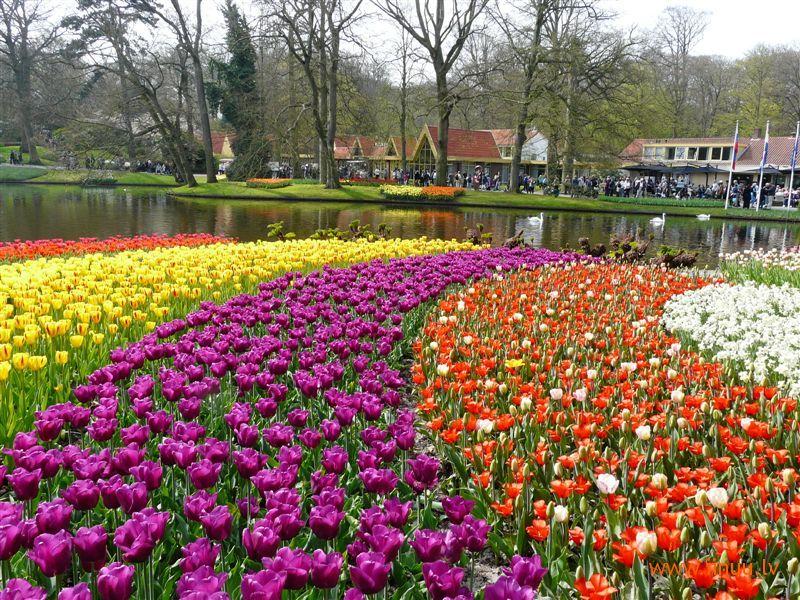 Holland Flowers Festival